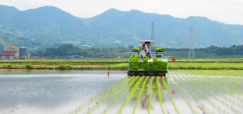 米農家の農作業